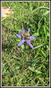 It's called Common Camas. But it's really not all that common.