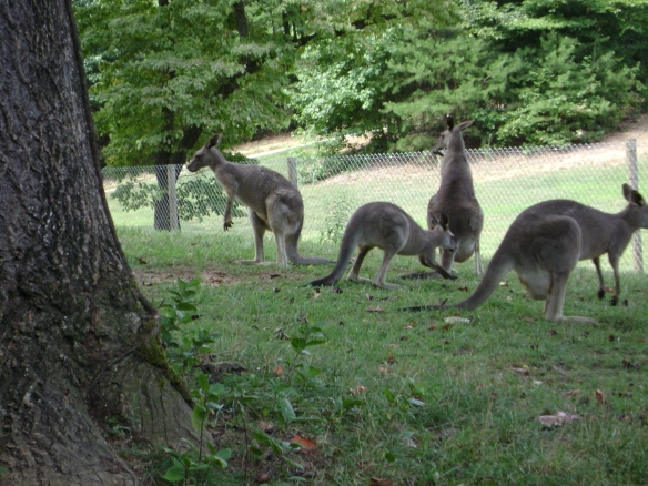 Seriously--a kangaroo sanctuary in north Georgia!