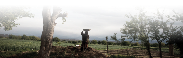 "This 7 Virtues photo's caption reads, ""Female Afghan farmer at harvest time"""