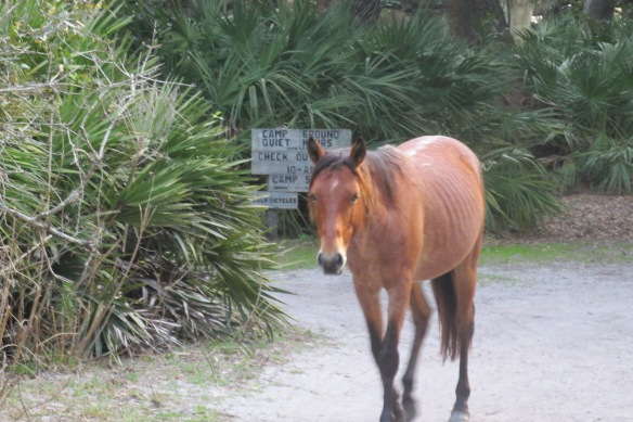 Horse in your campground, ma'am? Why sure.