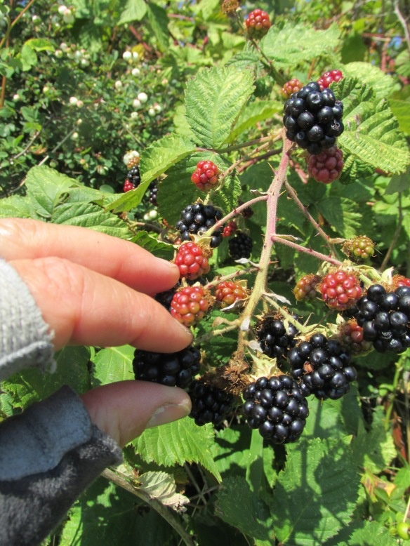 Bike gloves and blackberries: made for each other