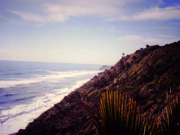 The wild west coast, near Greymouth