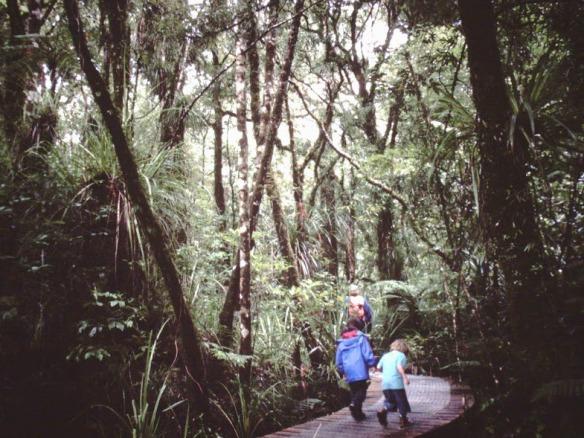 We tramped in native bush...(here, on the Abel Tasman Track)