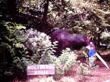 The only kiwi the boys got to see. (Wellington Zoo)