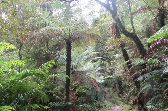 I love me some tree ferns.