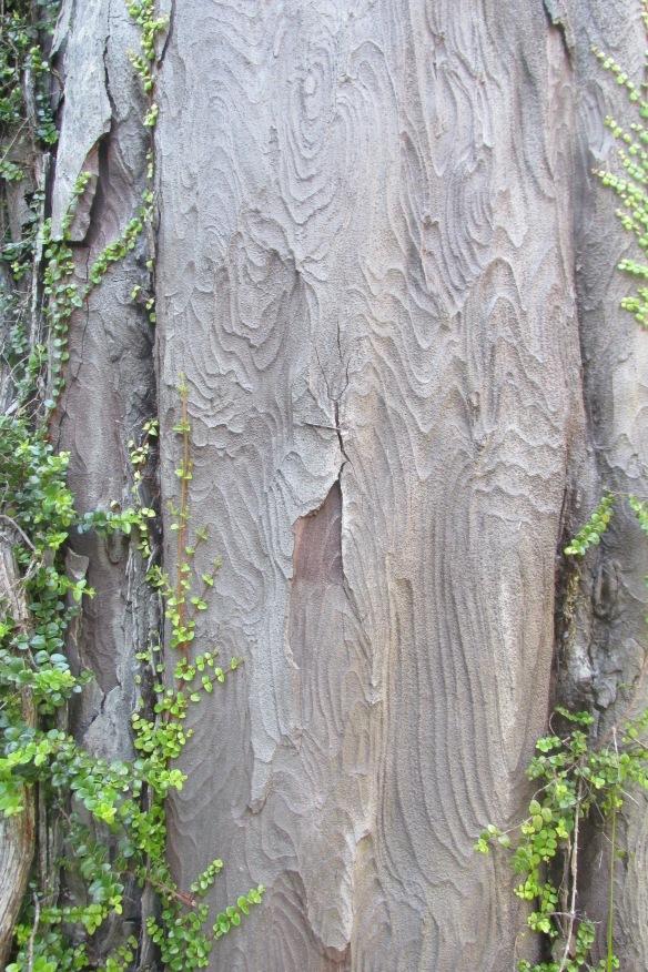 closeup of Kahikatea bark