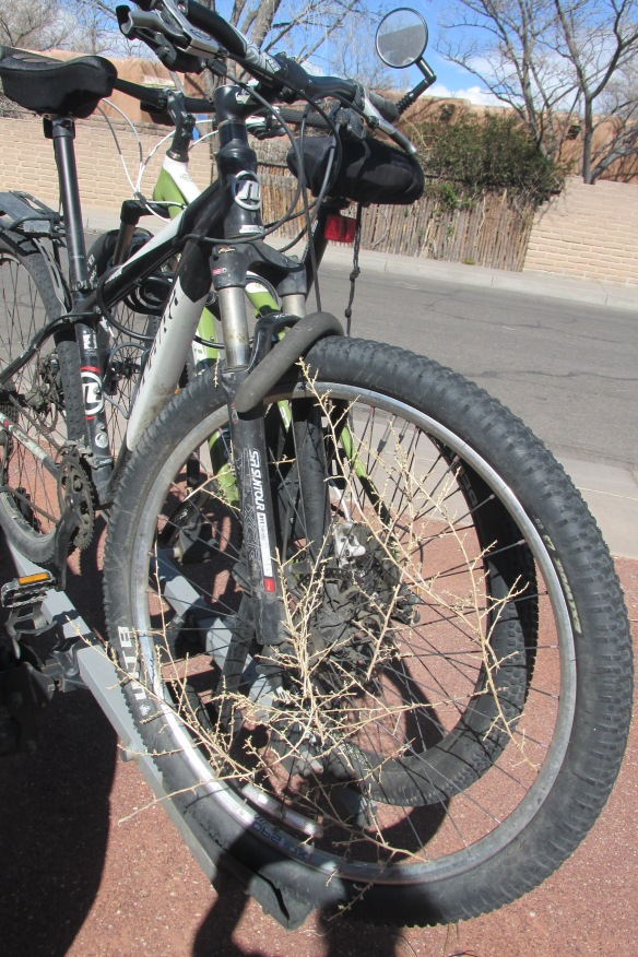 When tumbleweed meets bike. Seriously, the size of some of those things!